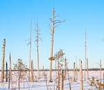 Зимнее болото в окрестностях ЛОС